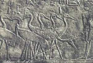 Another scene from the tomb of Ti