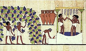 Egyptian men pick grapes and tread them for wine