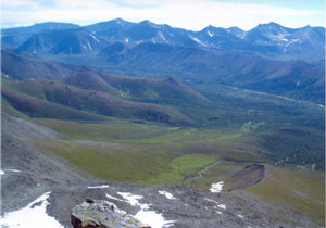 Ural Mountains: low green plants in a meadow and a line of mountains behind it