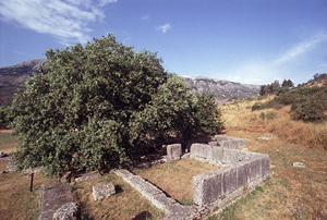 Stone walls and a big tree on the side of a mountain: Dodona's Greek oracle