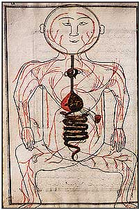Illustration of the blood vessels inside the body in the work of Ibn al Nafis