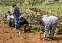 Pueblo farmers