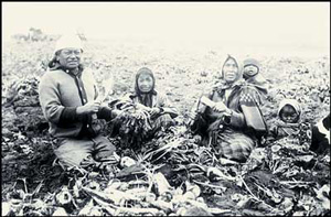 Cree women and children harvesting sugar beets in Canada in 1910 (photograph by John Woodruff;Courtesy of Library and Archives Canada)