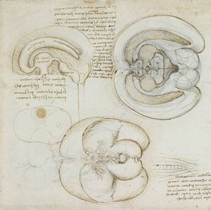 Leonardo da Vinci's drawing of the human brain (ca. 1550 AD)