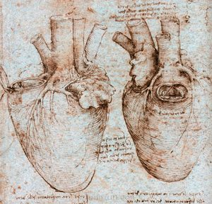Leonardo da Vinci's drawing of a human heart (ca. 1550 AD)
