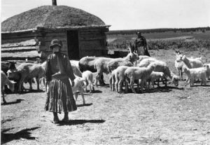 Navajo with sheep