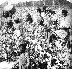 Slaves picking cotton. See the little girl?
