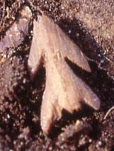 Pre-Dorset fish hook