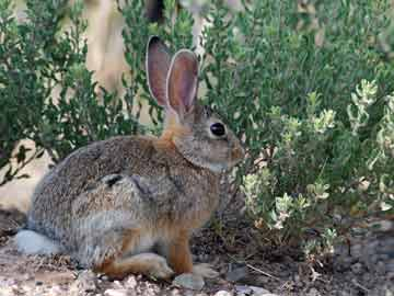 a rabbit sitting near a bush
