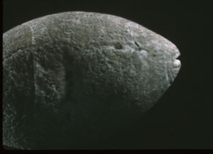 Stone carving of a fish (San Francisco, ca. 7000 BC)