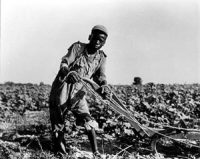 A 13-year-old boy sharecropping (1937)