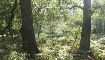 Sherwood Forest Sherwood Forest, where Robin Hood lived