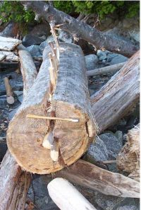 Wooden wedges to split a log
