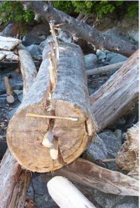 Wooden wedges to split a log