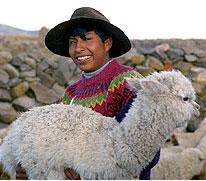 Baby alpaca (Peru)