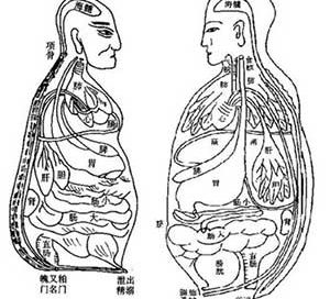 Chinese drawing of the organs (about 1200)