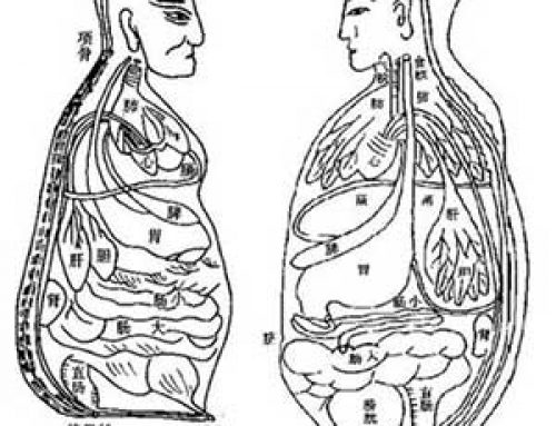 Human organs: medieval and modern science