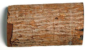 Cinchona bark - where quinine comes from