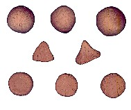 Neolithic counting tokens